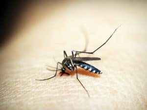 get rid of those pesky mosquitoes with a professional pest control company